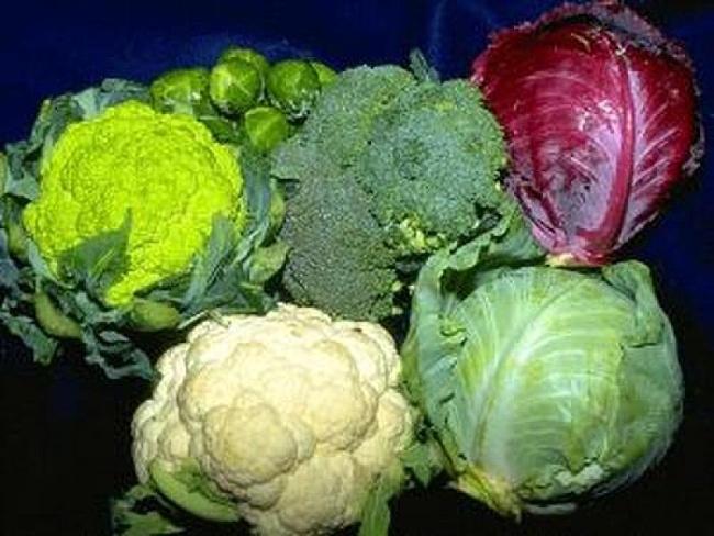 Как хранить капусту?